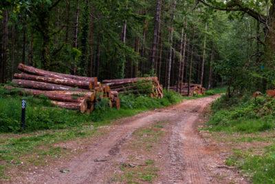 Pathway through Bree hill