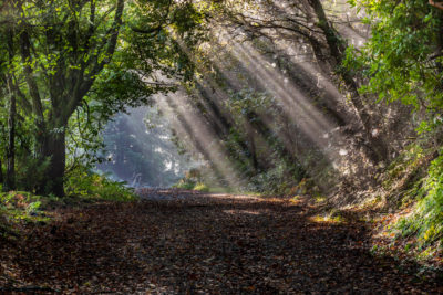 rays of light through trees