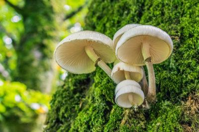 Wild mushrooms on side of tree